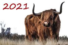 2021 Jaar van de os