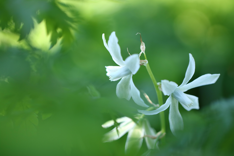 inspiratie bloemen met onscherpe voorgrond