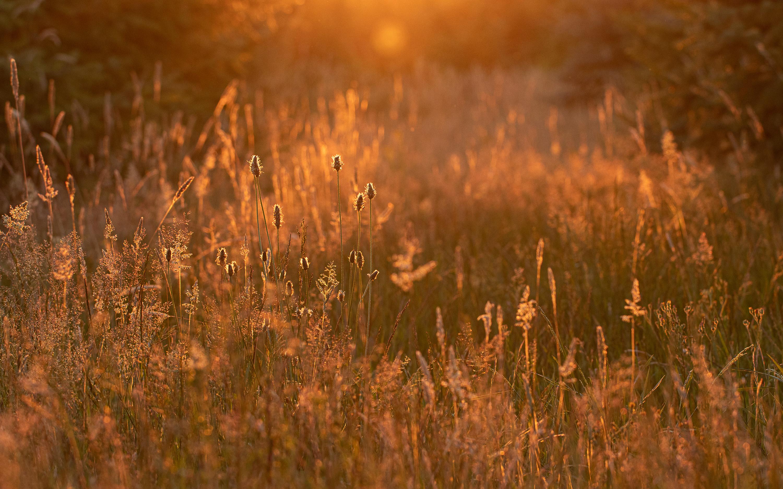 Maandopdracht - Smalle weegbree in natuurlijke omgeving met randlicht